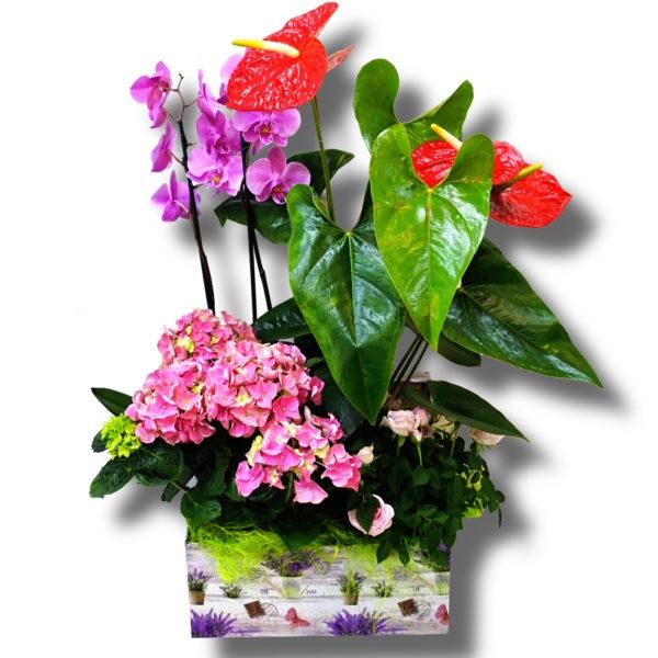 Aranjament floral in cutie Vintage care contine Orhidee, Anthurium, Hortensie si Trandafir